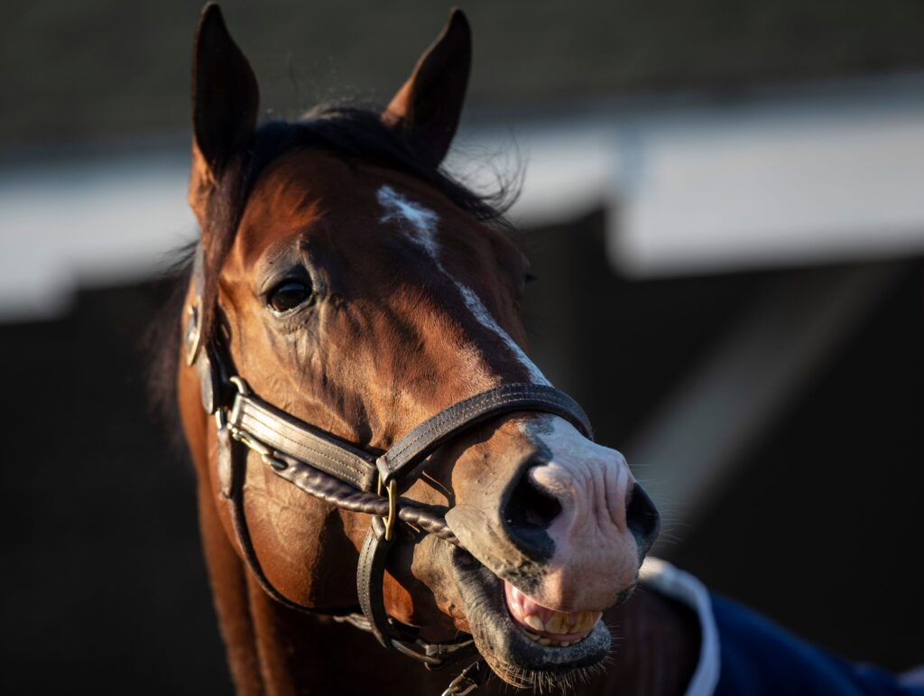 Kentucky Derby hopeful Highly Motivated surveys the scene while being bathed on the backside of Churchill Downs following a morning workout. April 20, 2021  Af5i5744